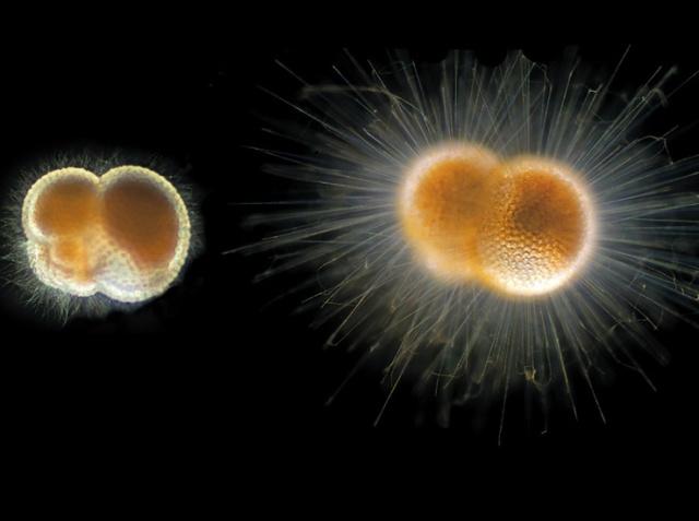 plankton-53